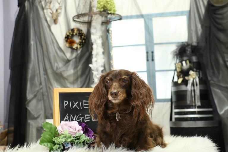 PIXIE&ANGEL