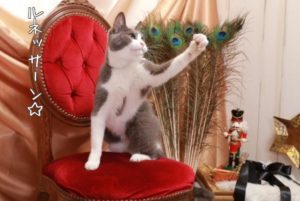 猫パーンチ