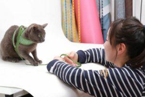 猫モデルさんと打ち合わせ