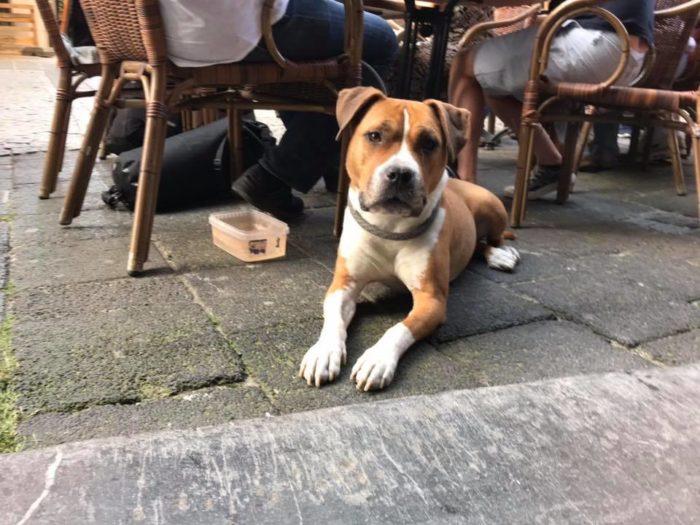 ヨーロッパ犬