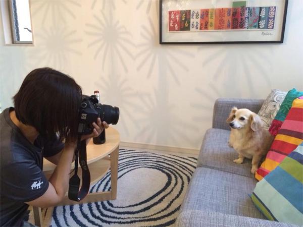 モデル犬撮影