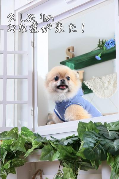 窓から鈴ちゃん
