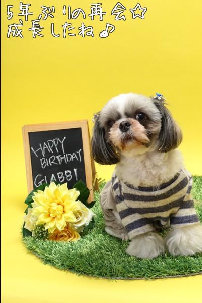 シーズー誕生日