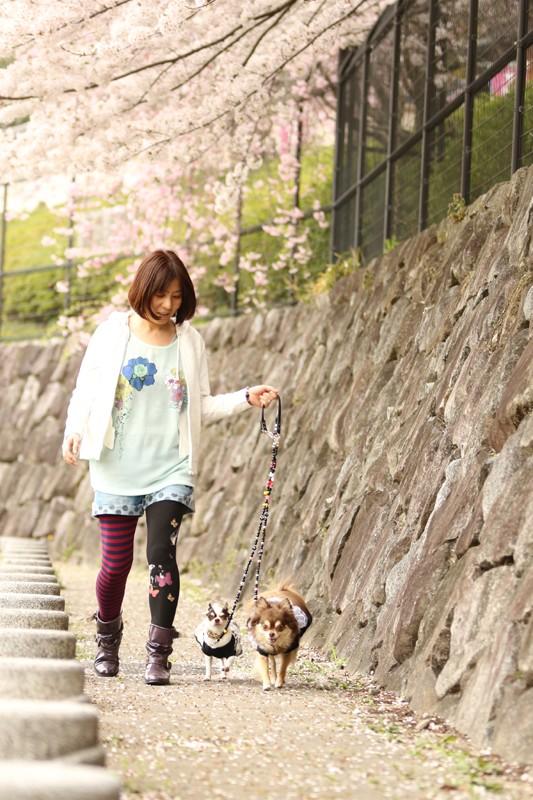 桜の元でお散歩