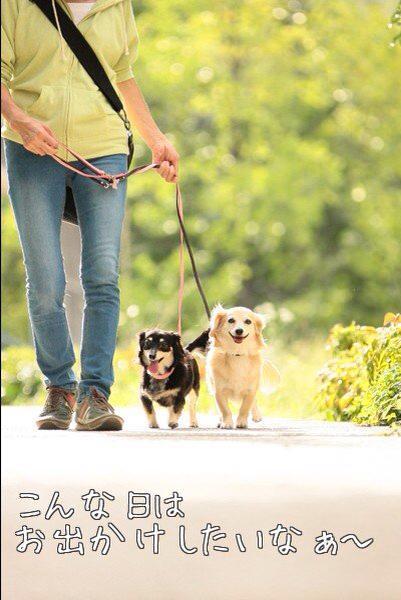 エディ&ララ お散歩風景