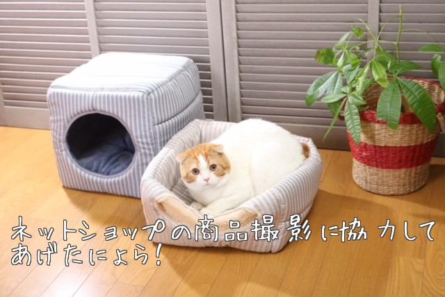 猫モデル商品撮影