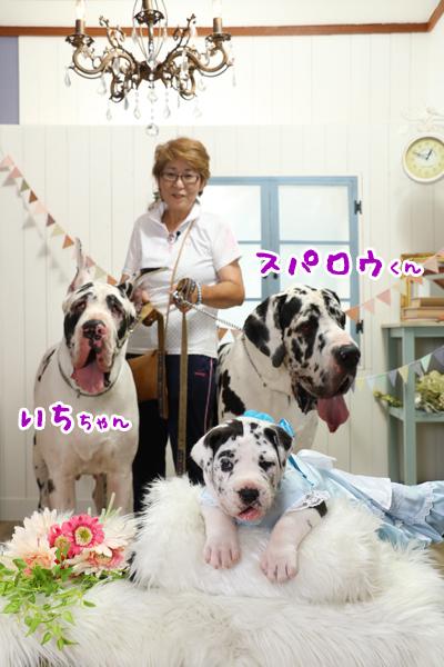 日本一デカい犬