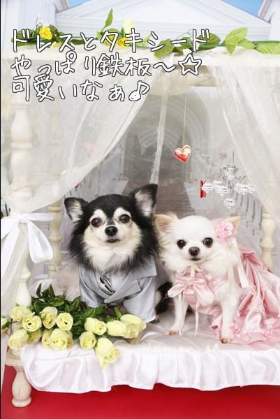 ドレス&タキシード2ショット