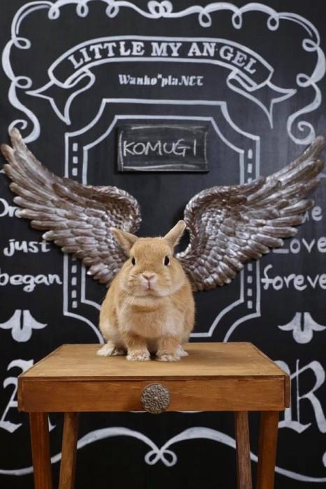 ウサギ黒板ボード