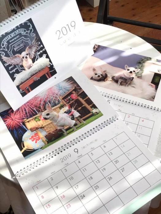チワワ カレンダー