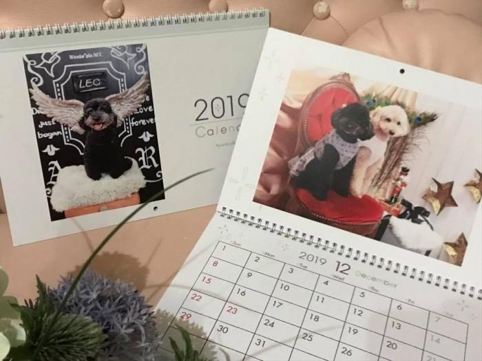 プードル カレンダー